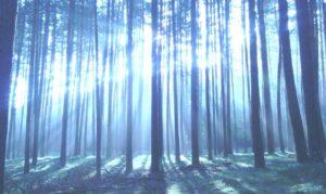 Licht ins Dunkle